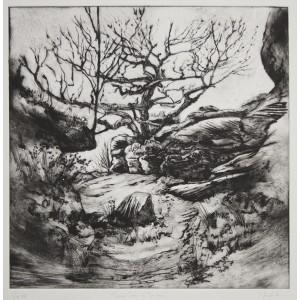 Twisted Tree at Brimham
