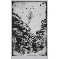 Crows and Birch at Brimham