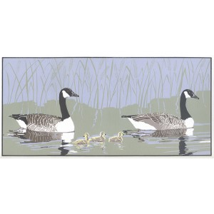Early Morning Swim - Canada Geese