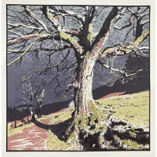 Old Oak - Nidderdale Way