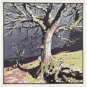 Old Oak - Nidderdale Way